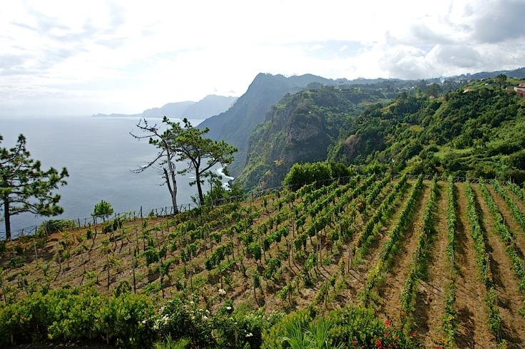 vineyard_northcoast